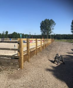 The arena fencing at HMB Equestrian has had a facelift providing a nice staright edge to ride down. 249x300 - HMB Equestrian - Back with a Bang!