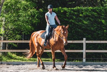 ehorses image 2 360x245 - Struggle with selling horses?  ehorses provide some top tips