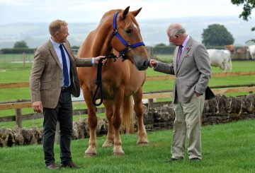 HRH with Suffolk Punch Horse 360x245 - The Prince of Wales visits Cotswold Farm Park to discuss Rare Breeds Conservation