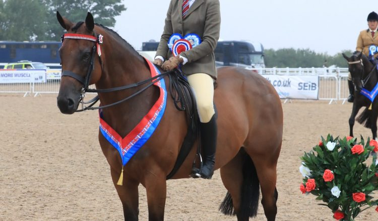 Bobby McGoldrick and Mumford C Equinational 750x440 - Mumford takes the SEIB Racehorse to Riding Horse Championship at UK National Championships