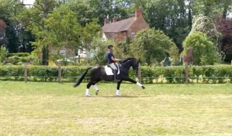 Carl Hester riding Utophia in the field at home
