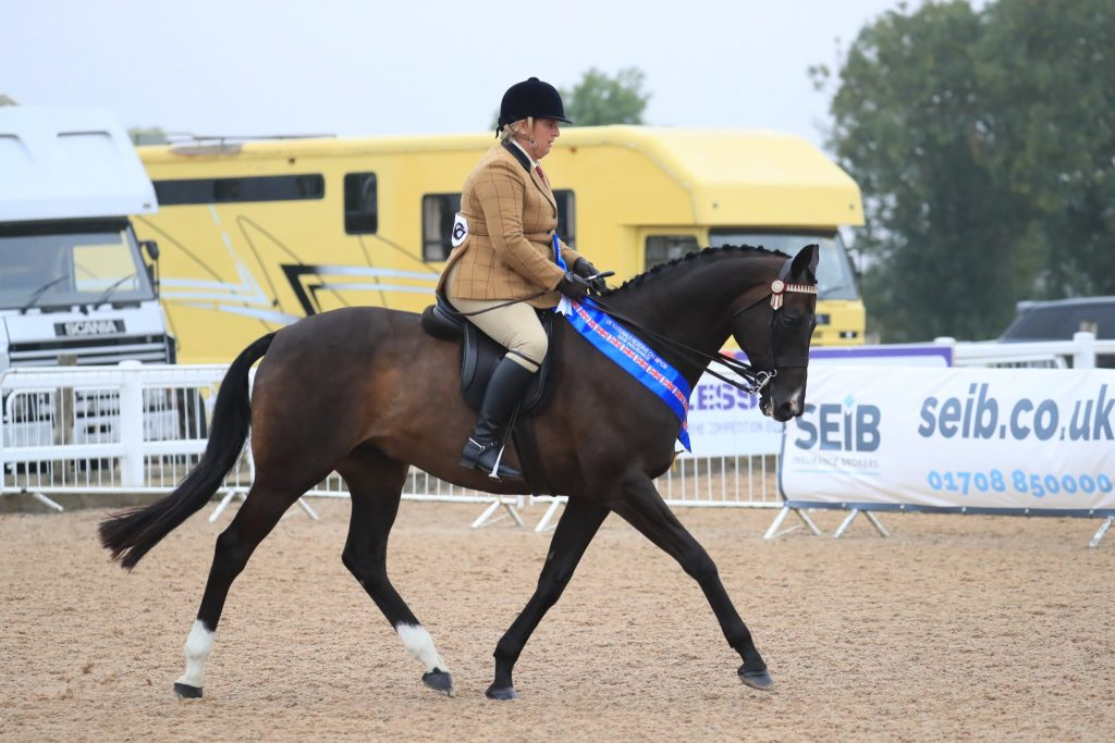 Hannah Chisman and First Fandango C Equinational 1024x683 - Mumford takes the SEIB Racehorse to Riding Horse Championship at UK National Championships