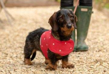 Harness Cranberry Stars4 2 360x245 - Mutts and Hounds, 'pawfect' products for hound and home now available in Harrods