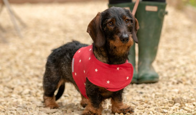 Harness Cranberry Stars4 2 750x440 - Mutts and Hounds, 'pawfect' products for hound and home now available in Harrods