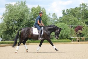 Uthopia stretching on activ track 300x200 - Carl Hester : Keeping busy during lockdown