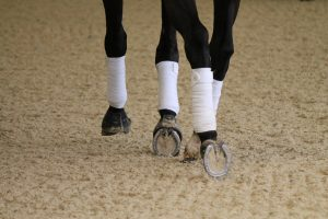 walking on ecotrack hooves close up 2 300x200 - Carl Hester : Keeping busy during lockdown