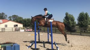 Harriet is thrilled to have a new horse on the yard Up N Ova or Donal as he is known at home. 300x169 - All Systems Go at HMB Equestrian