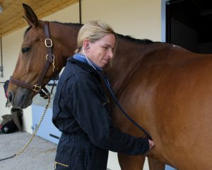 D329734 300x240 - The importance of insurance with Petplan Equine