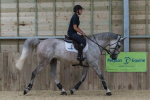 D411118 300x200 - The importance of insurance with Petplan Equine