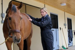 D329745 300x200 - The importance of insurance with Petplan Equine