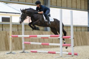 D329848 300x200 - The importance of insurance with Petplan Equine