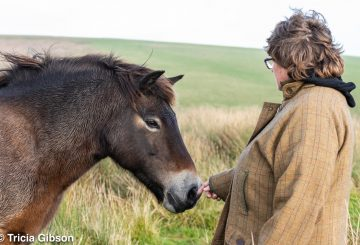 DSC 2321 360x245 - Owners group brings at-risk Exmoor pony bloodlines back to Exmoor