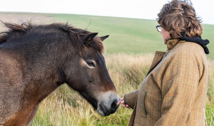 DSC 2321 750x440 - Owners group brings at-risk Exmoor pony bloodlines back to Exmoor