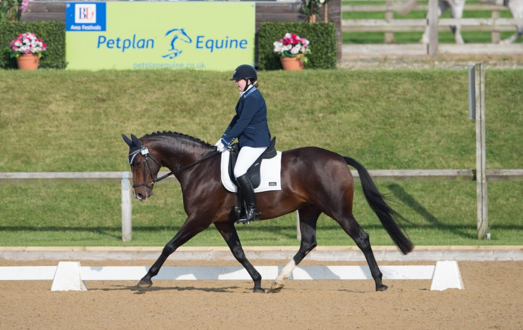 DSC 3852 002 1024x647 - The importance of insurance with Petplan Equine