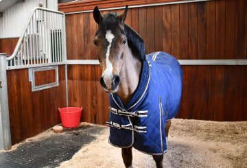 For veteran horses and ponies winter can be tough and present owners with a challenge. 360x245 - Veteran Health During Winter