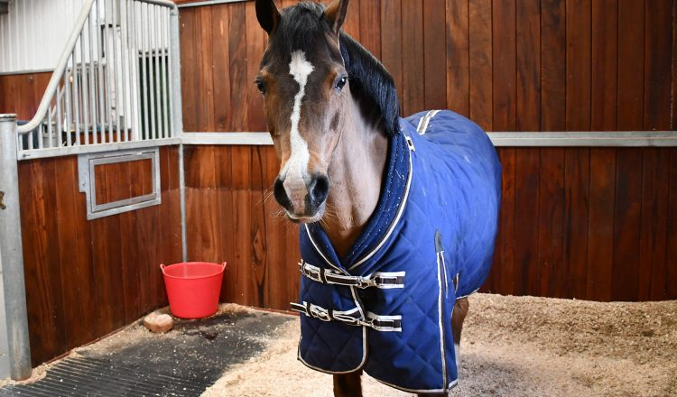 For veteran horses and ponies winter can be tough and present owners with a challenge. 750x440 - Veteran Health During Winter