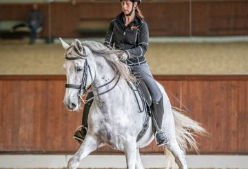 The Dressage Coach Launch Image 360x245 - Zoom into the Dressage Arena with Confidence during Lockdown 2.0