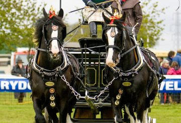 Carol Stevens Newark  Notts 2010 094 1 360x245 - Dates announced for 2022 National Shire Horse Show