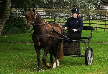 george 360x245 - Rescue pony delights rehomers by winning national carriage driving award