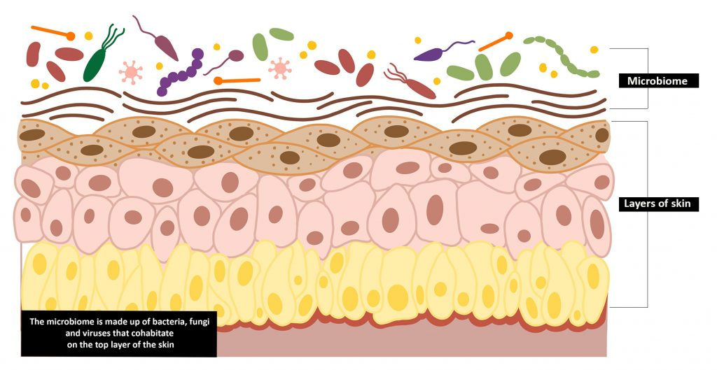Skin biome illustration labelled 1024x529 - Silver Honey™ a natural combination of Manuka Honey and MicroSilver BG™