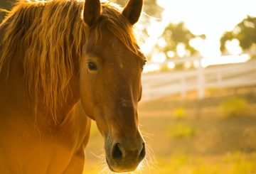 kelly forrister OLL7SNhGeZk unsplash2 360x245 - Horse Rescue Centers to Win Donation