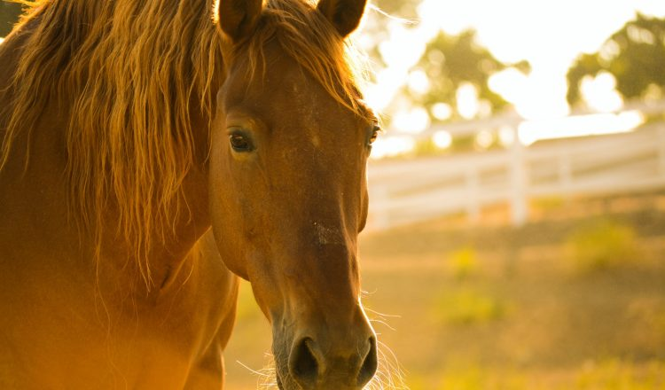 kelly forrister OLL7SNhGeZk unsplash2 750x440 - Horse Rescue Centers to Win Donation